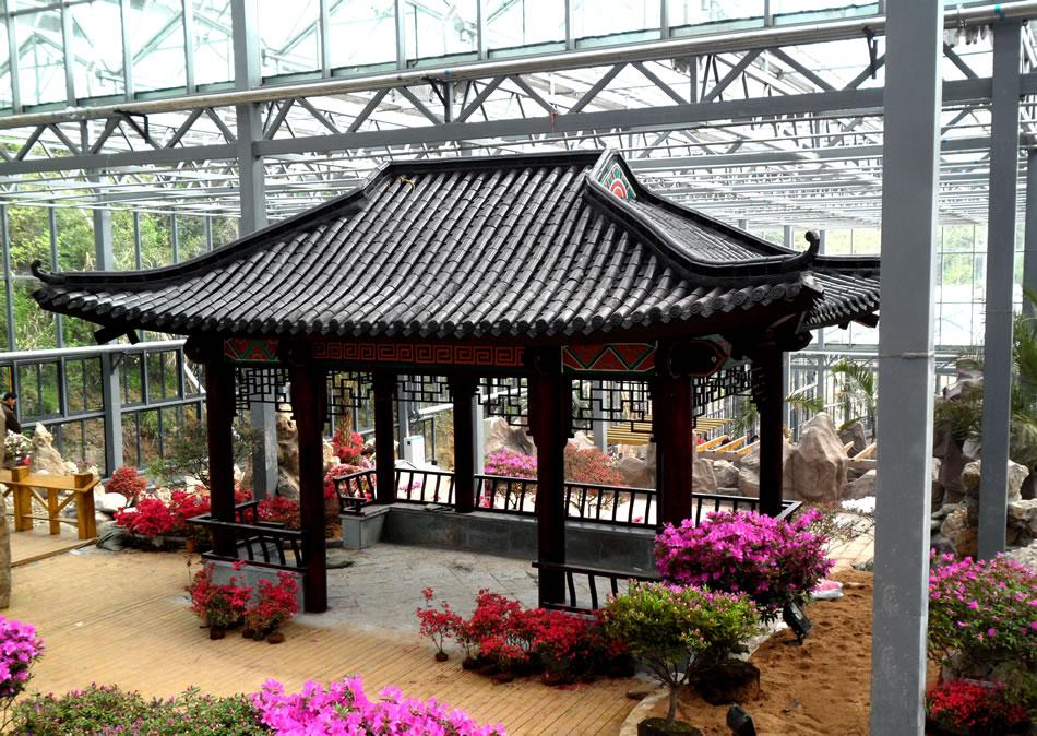麻城龟峰山杜鹃园